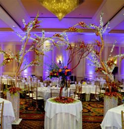 Home delaware weddings local venues junglespirit Image collections